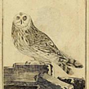 Die Stein Eule Or Church Owl Art Print