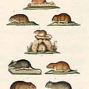 Different Kinds Of Mice Art Print
