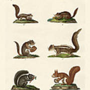 Different Kinds Of Squirrels Art Print