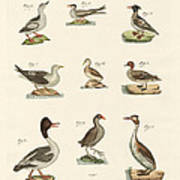 Different Kinds Of Waterbirds Art Print