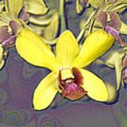 Digitised Orchids Art Print