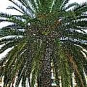 Digitized Cali Palm  Art Print