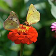 Dinner Table For Two Butterflies Art Print