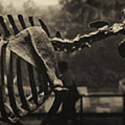 Dinosaur Bones 2 Art Print
