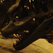 Dinosaur Bones 3 Art Print