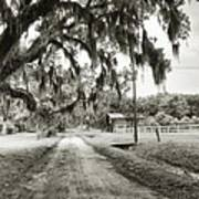 Dirt Road On Coosaw Plantation Art Print