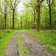 Dirt Road Surrounded By Trees In Art Print