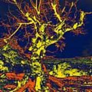Dried Up Tree Art Print