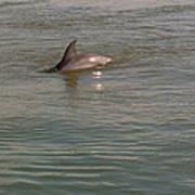 Diving Dolphin Art Print