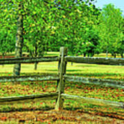 Do Not Fence Me In Art Print