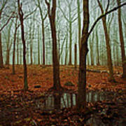 Do We Dare Go Into The Woods Art Print by Karol Livote