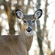 Doe A Deer A Female Deer Art Print