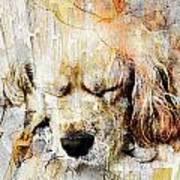 Dog 391-08-13 Marucii Art Print