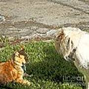 Dog And Cat Discuss Art Print by Artist and Photographer Laura Wrede