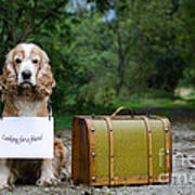 Dog And Suitcase Art Print