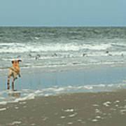 Dog Day Beach Art Print