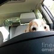 Dog Driving A Car Art Print