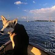 Dog In A Dingy At Put-in-bay Harbor Art Print