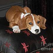 Dog - Mr. Oliver Relaxing Art Print