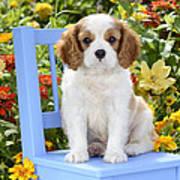 Dog On Blue Chair Print by Greg Cuddiford