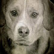 Dog Posing Art Print