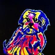 Dog Tibetin Lhasa Apsos  Art Print