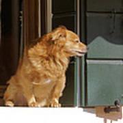 Doggie In The Window Art Print