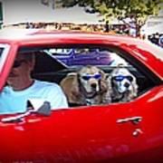 Doggies In The Window Art Print