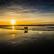 Doggy Sunset Art Print