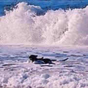 Dogs At Carmel California Beach Art Print