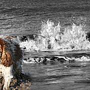 Dogs Enjoying The Sea Art Print by Jo Collins