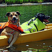 Dogs In A Kayak Art Print
