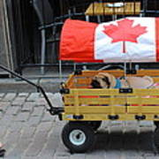 Dog's Life In Canada Art Print