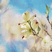 Dogwood Against Blue Sky Art Print