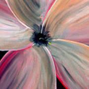 Dogwood Bloom Art Print