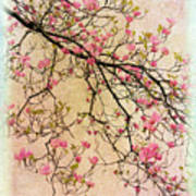 Dogwood Canvas 3 Art Print
