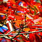 Dogwood In Autumn Art Print
