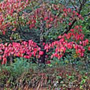 Dogwood Leaves In The Fall Art Print