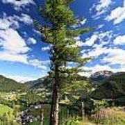 Dolomites - Tree Over The Valley Art Print