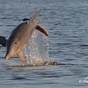 Dolphin I Mlo Art Print