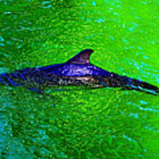 Dolphin In The Shallows Art Print