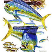 Dolphin In Weedline Art Print