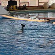 Dolphin Show - National Aquarium In Baltimore Md - 1212142 Art Print