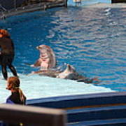Dolphin Show - National Aquarium In Baltimore Md - 1212174 Print by DC Photographer