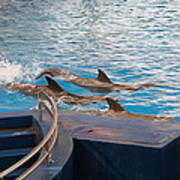Dolphin Show - National Aquarium In Baltimore Md - 1212186 Art Print