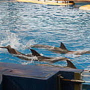 Dolphin Show - National Aquarium In Baltimore Md - 1212187 Art Print