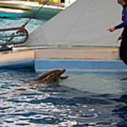 Dolphin Show - National Aquarium In Baltimore Md - 1212195 Art Print