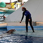Dolphin Show - National Aquarium In Baltimore Md - 1212196 Print by DC Photographer
