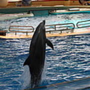 Dolphin Show - National Aquarium In Baltimore Md - 1212209 Art Print