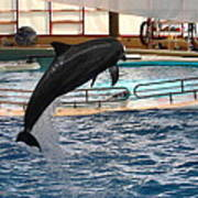 Dolphin Show - National Aquarium In Baltimore Md - 1212212 Art Print by DC Photographer